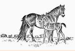 Friends of The Exmoor Pony Society